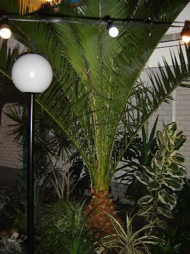 Wie weet hoe deze palm heet?