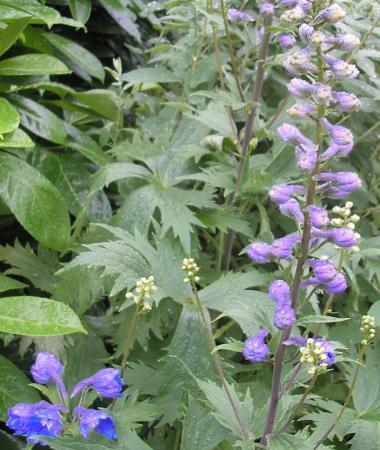 een aantal onbekende planten