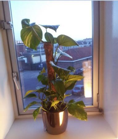 Wie herkent deze plant?