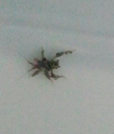 wie weet wat dit voor een insect is?