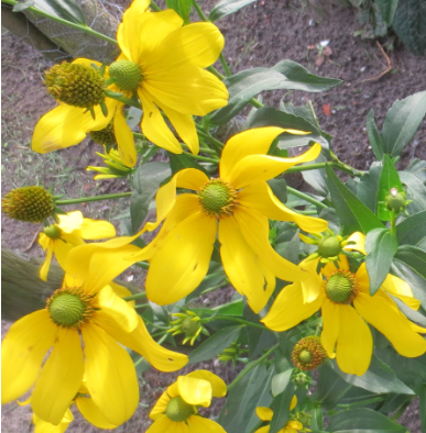 Naam van deze gele bloemen