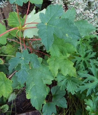 Kent iemand deze plant?