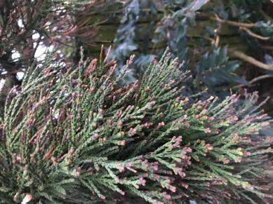 Naalden van boom