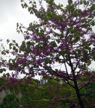 Wie herkent deze boom