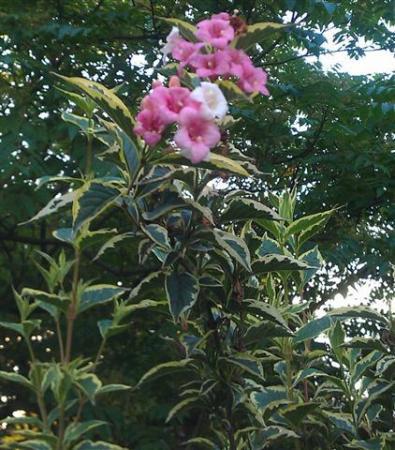 Onbekende plant/struik