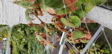 bovenkant van de plant