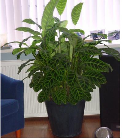 Wat voor plant is dit ?