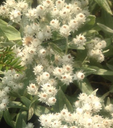 Lage witte bloemetjes.