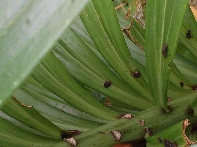 Slakken op lelies