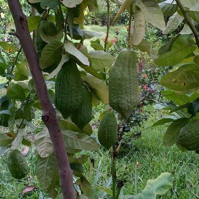 Welke citrus is dit?