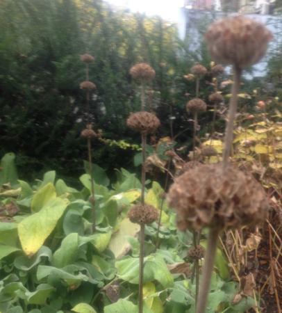 Onbekende plant 2