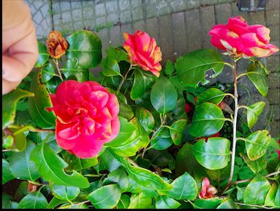 Vragen over de planten in mijn tuin
