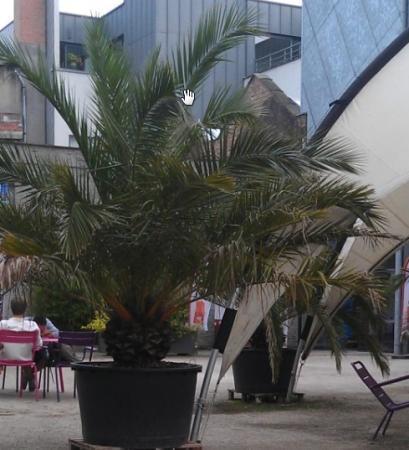 Onbekende palm