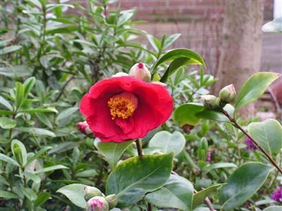 bloeiende plant in achtertuin