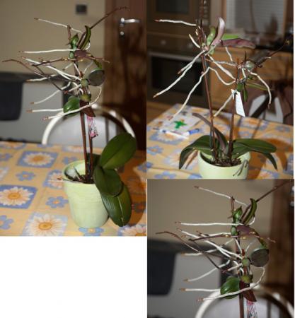 afknippen en planten?