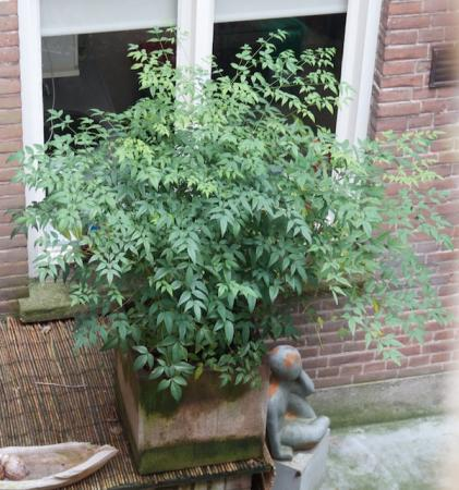 Welke winterharde tuinplant is dit?
