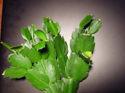 Welke plant is dit? (en hoe ik vermeerder ik deze)