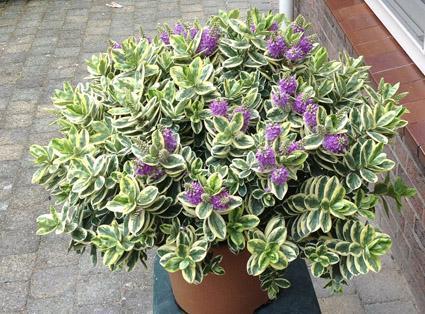 Wie weet wat dit voor plant is...