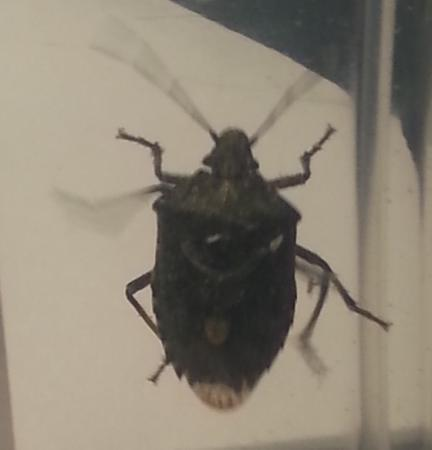 Weet iemand welk insect dit is.