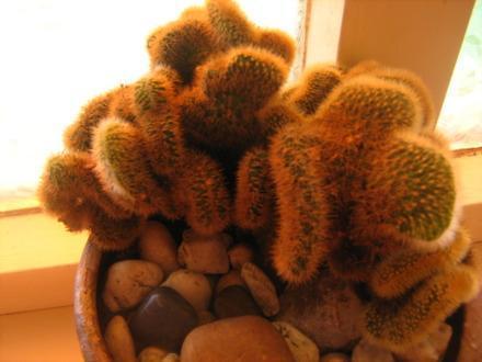 Cactus welke is dit?