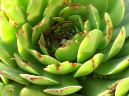 vetplant wordt opgegeten