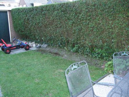Hoe kan ik een saai stukje tuin opfleuren?