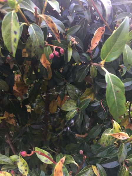Vlekken, geel blad, pluis