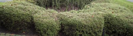 Naam van bladverliezende struik