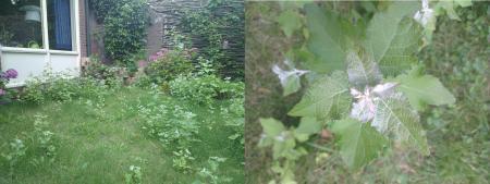 Onkruid tussen mijn gras