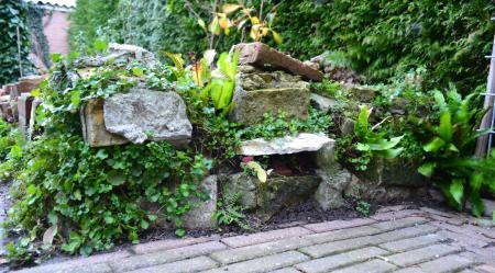 Recommandatie varen/rots planten voor muur.