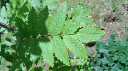 Van welke boom is dit het blad?