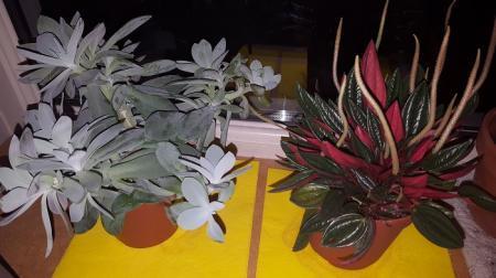 Welke 2 planten zijn dit