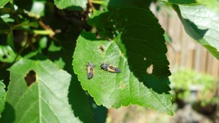 Vreemde insecten
