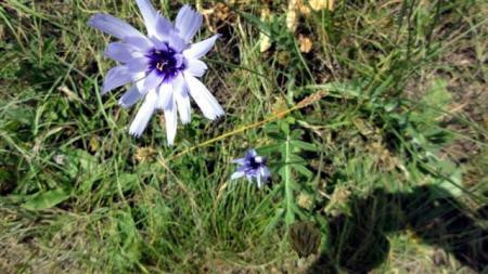 Identificatie bloemen en planten