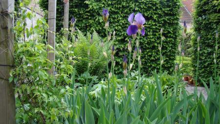 Iris scheuren - bewaren