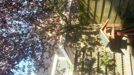 Prunus nigra lijkt het op te geven.