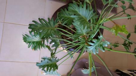 De naam van deze plant ???