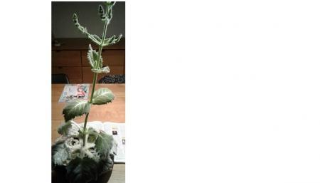 Welke plant is dit en hoe verzorg ik hem?