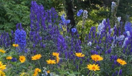 Naam van paarse bloemen