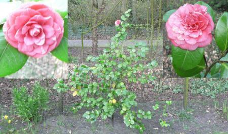 Practige plant met rode boemen