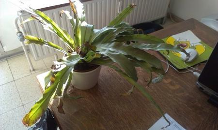 Hoe deze plant te verzorgen?