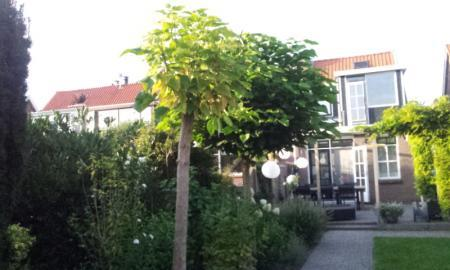 Slechte  groei linde boom?
