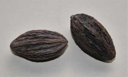 Van welke boom/plant komen deze zaden?