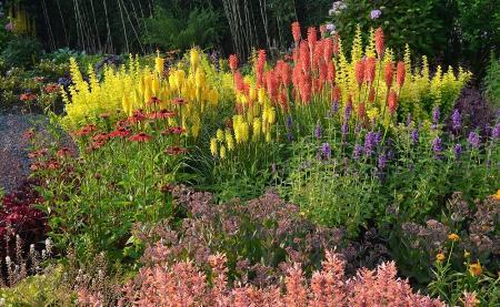 grond verbetering verwaarloosde tuin