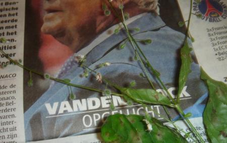 Naam van plant