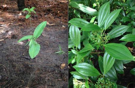 Welke twee planten zijn dit?