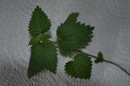 Wat is dit voor een plant ?