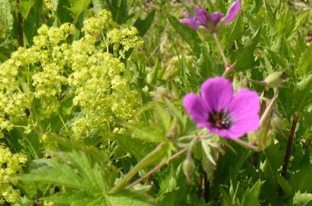 naam van deze bloem