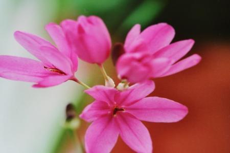 Wie kent de naam van deze plant/bloem?