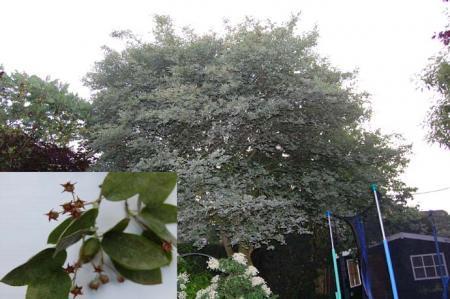 welke boom staat in mijn tuin